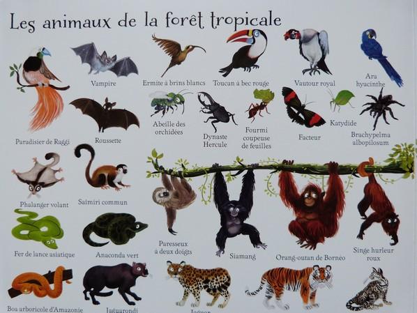 Préférence 1000 animaux en images [Chut, les enfants lisent] - Devine Qui  PL37